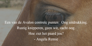 2016-controle-punt-oog-quote
