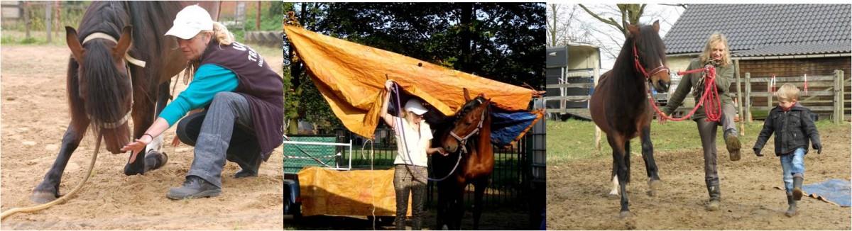 2015-07 Avalon Horse Play Dag Sandra Boers