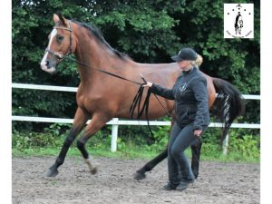 2016 Odin boost galop a d hand
